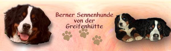 Berner Sennenhunde von der Greifenhütte